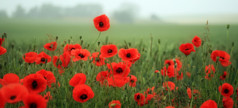 remembrance day assembly � farley mowat public school